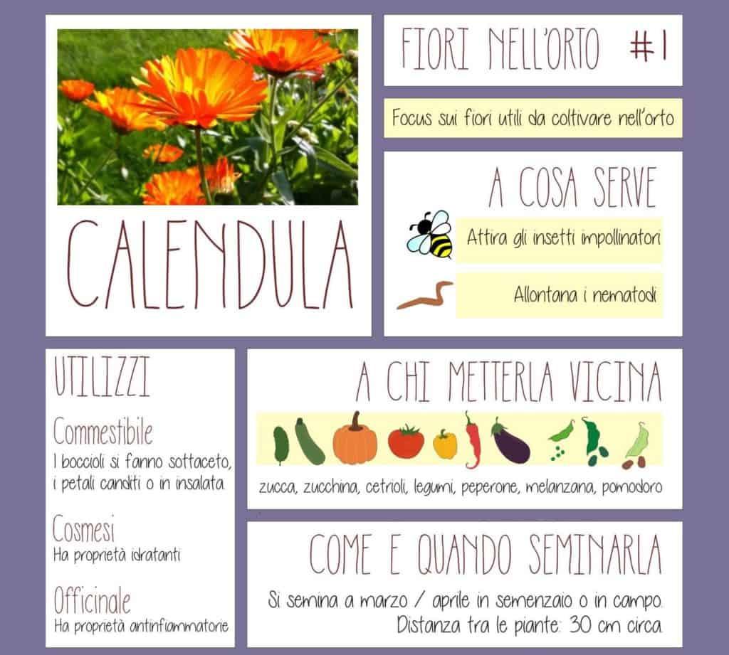 Fiori Da Piantare Nell Orto calendula: coltivazione e proprietà del fiore