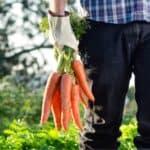 Come si coltivano le carote