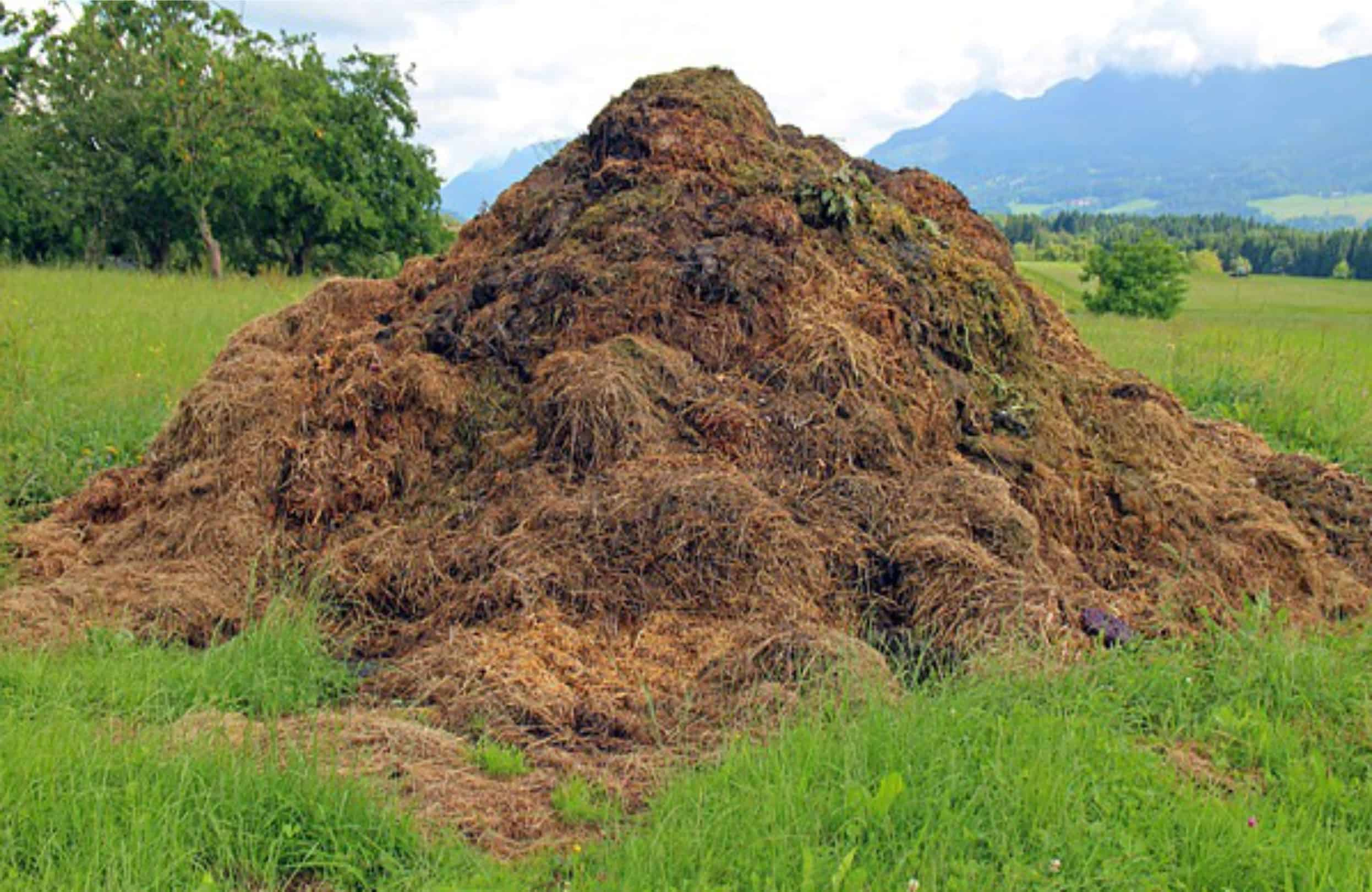 Come usare il compost nell'orto