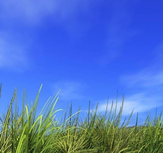 Esposizione dell'orto: clima, vento e sole