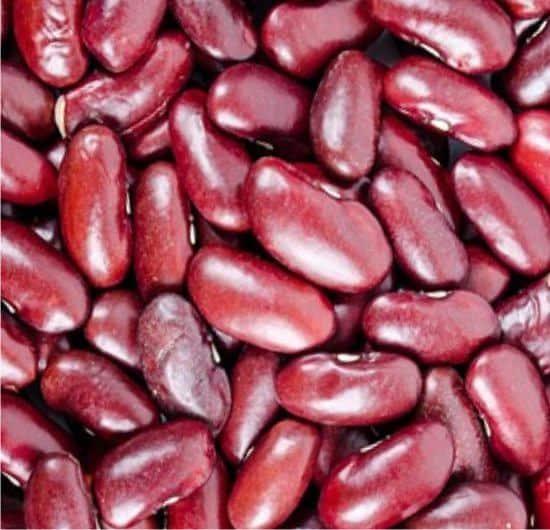 Piante leguminose