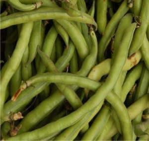 i fagiolini verdi