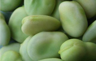 le fave verdi