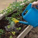 Irrigare l'orto: quando farlo e quanta acqua serve