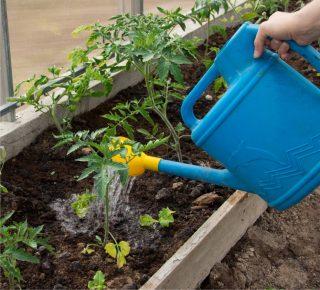metodo di irrigazione dell'orto