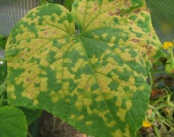 Le malattie delle piante da orto