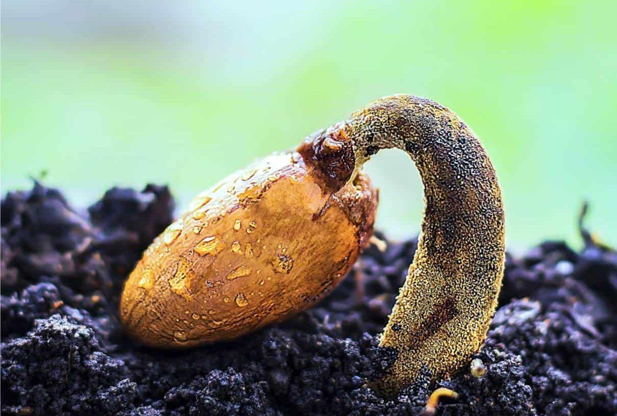Riscaldare Camera Da Letto come riscaldare il semenzaio: germinatoio fai da te