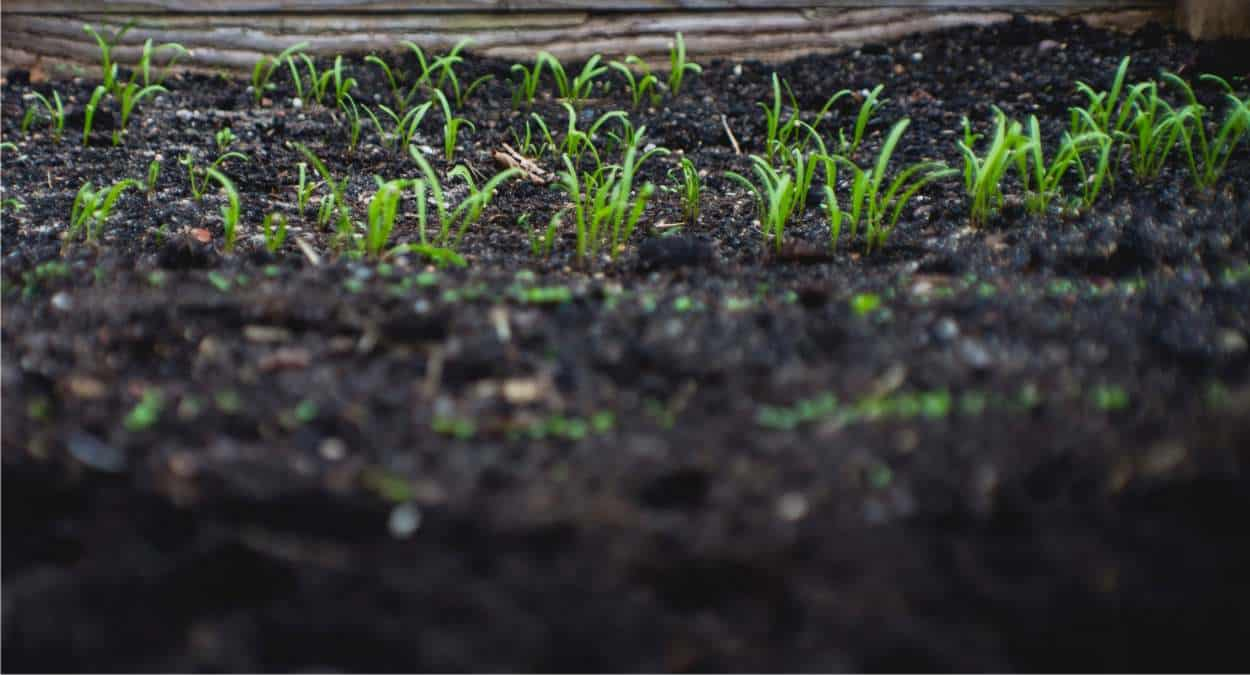 terreno dell'orto