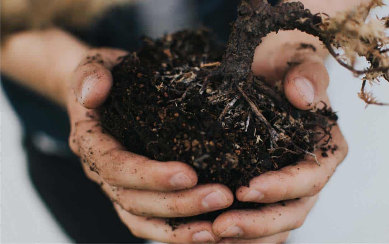tipi di suolo