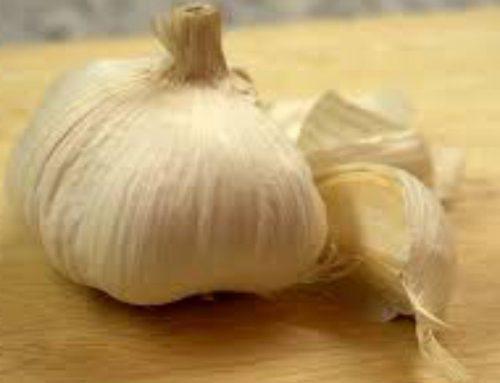 Decotto di aglio contro batteri e parassiti