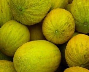 Il melone consigli e scheda di coltivazione for Coltivare meloni