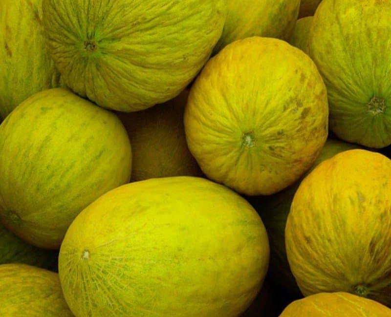 i meloni gialli invernali