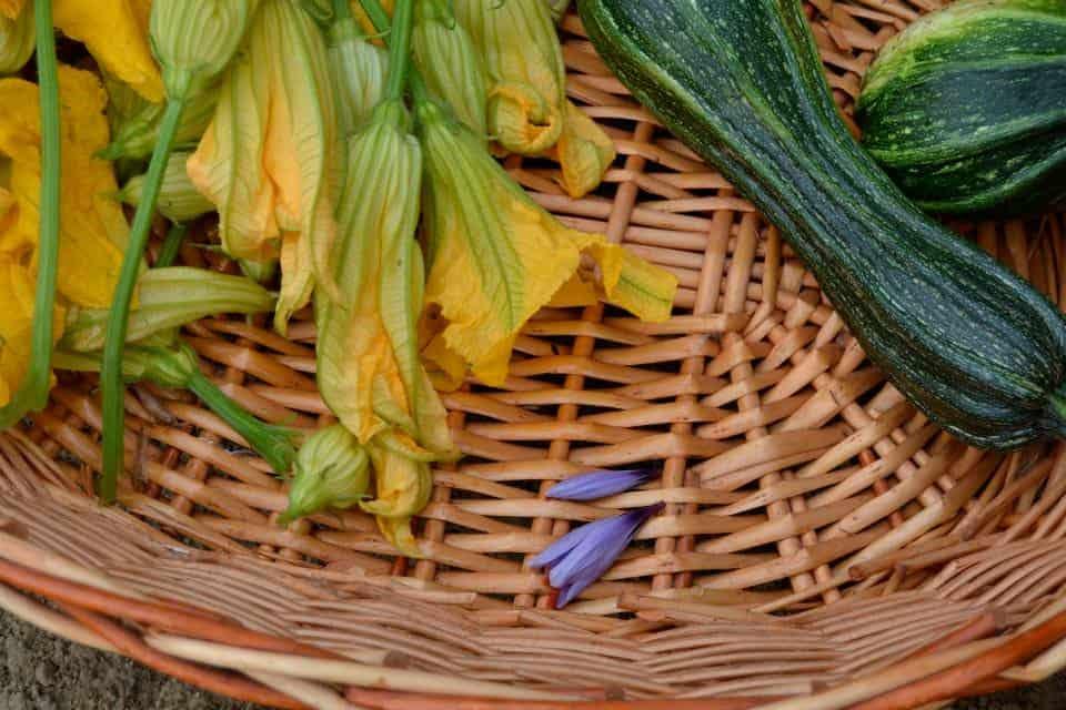 la raccolta della verdura