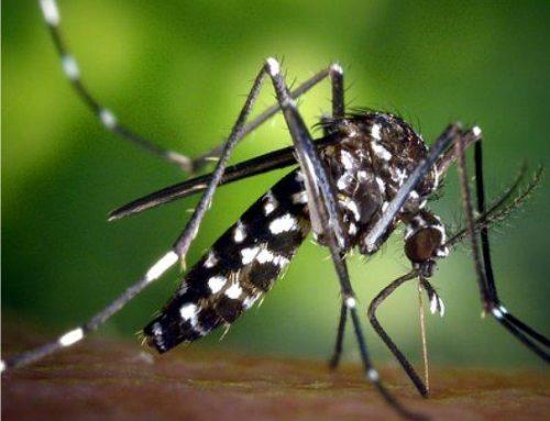 Allontanare le zanzare con le piante