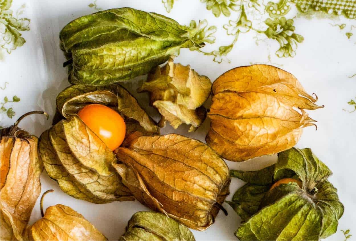 frutti alchechengi