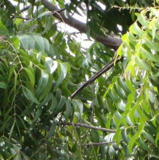 Insetticidi naturali: la difesa biologica dell'orto