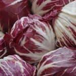 Radicchio, insalata trevigiana e cicorie a cespo