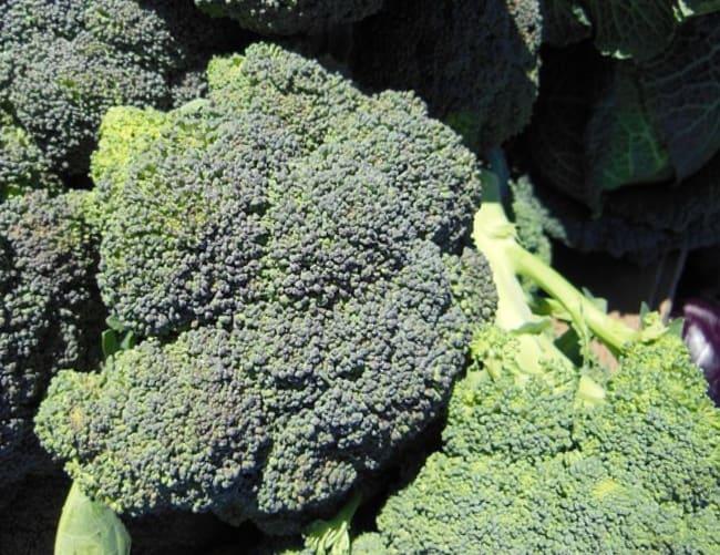 cavolo broccolo verde