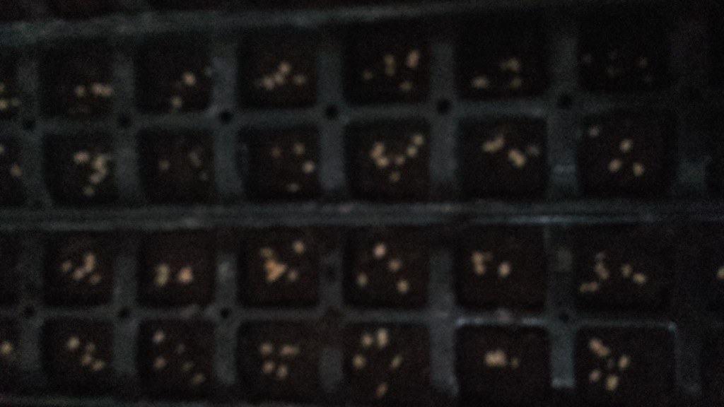 semi pomodoro