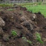Il letame: concimi naturali per l'orto biologico