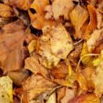Come usare le foglie nell'orto