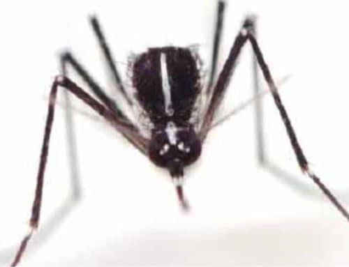 Nell'orto senza zanzare