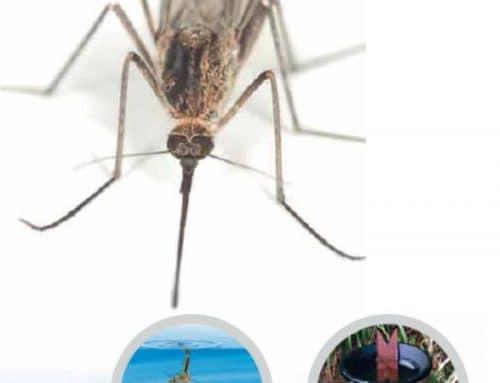Come prevenire la diffusione delle zanzare