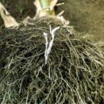Acquistare micorrize: qualche consiglio