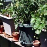 Come scegliere il vaso per l'orto sul balcone