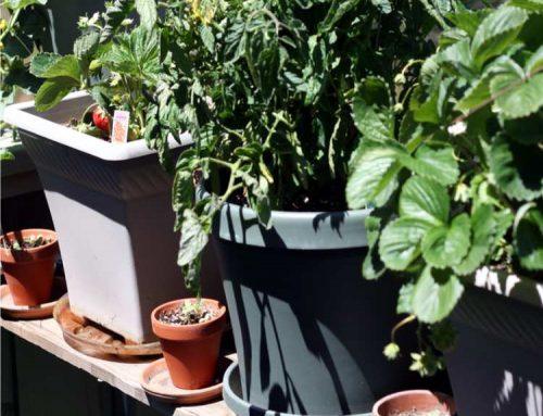 Orto sul balcone: come scegliere il vaso