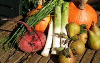 verdure da orto