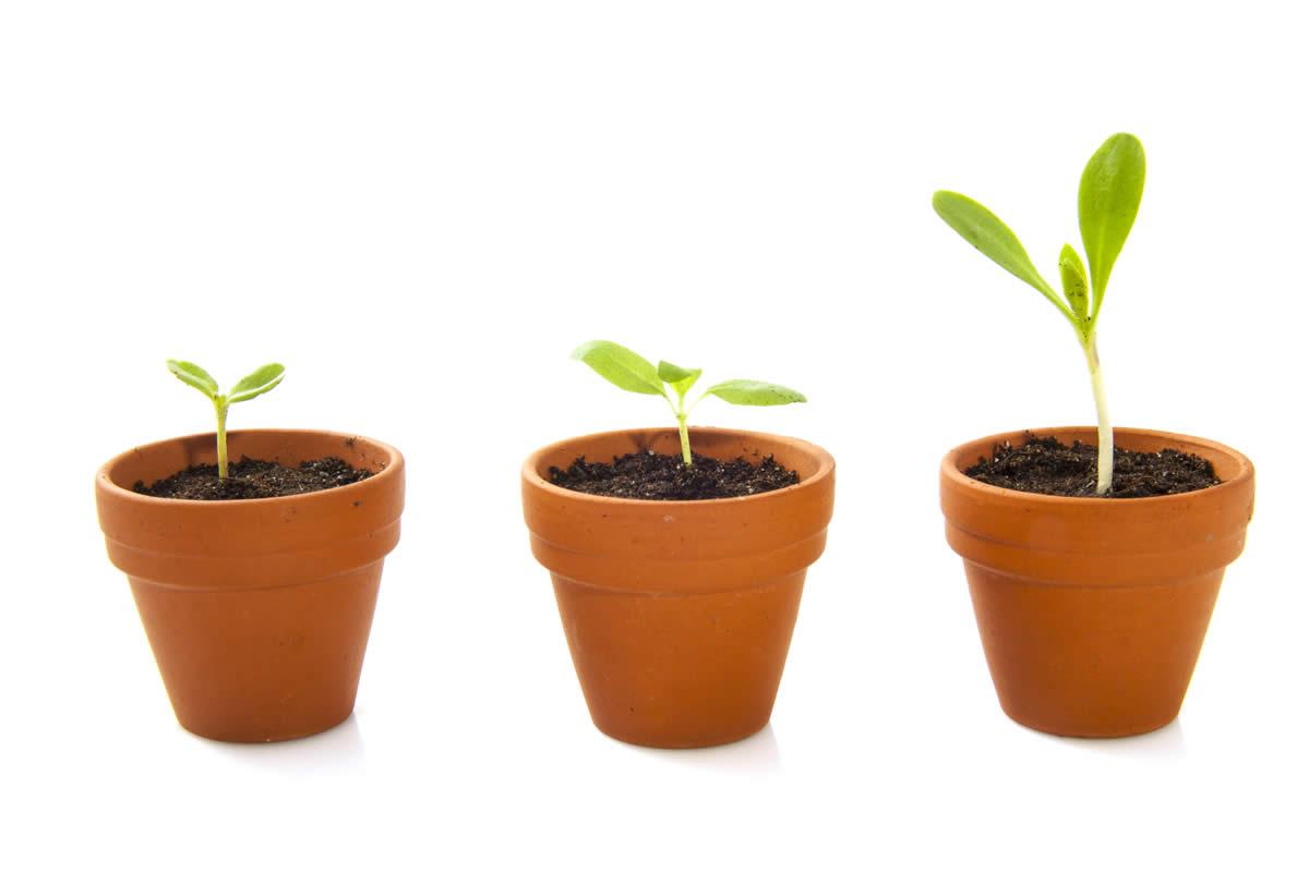 Ortaggi che crescono in vaso