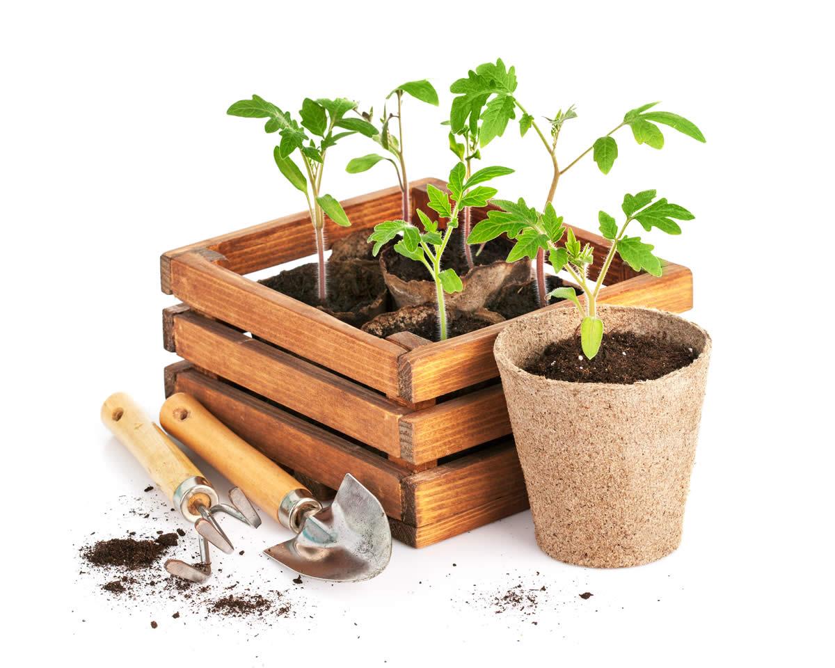 Preparare un orto