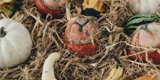 Coltivare zucche ornamentali
