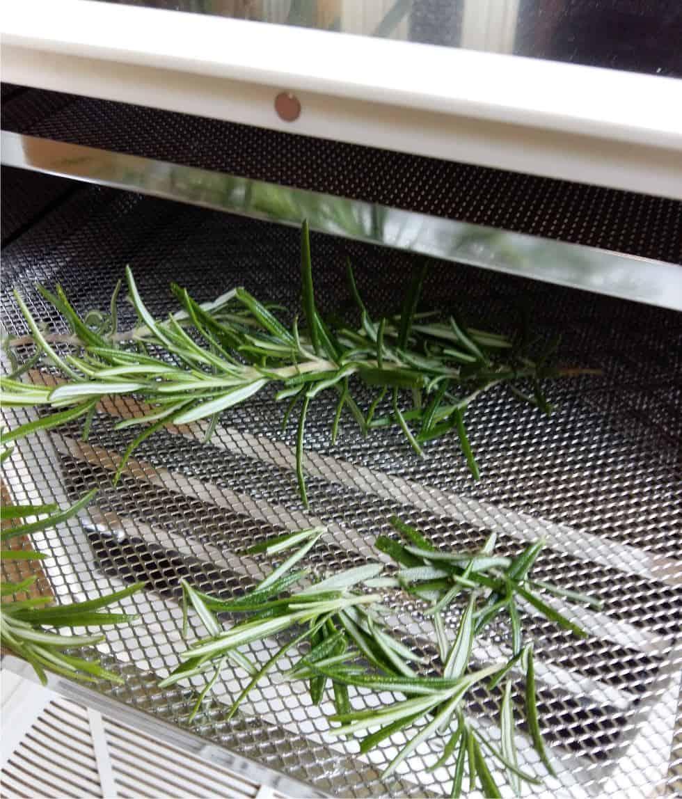 Come Far Morire Una Pianta come essiccare le erbe aromatiche | orto da coltivare