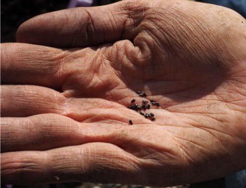 Come effettuare la semina diretta