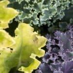 Ortaggi invernali: l'orto d'inverno