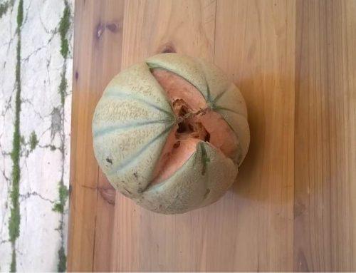 La spaccatura del melone