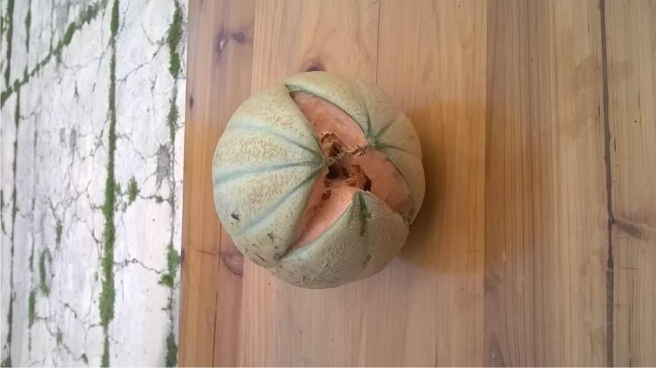 Le spaccature del melone for Melone coltivazione