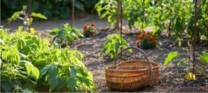 coltivare l'orto urbano