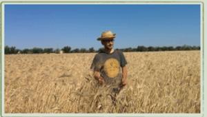 coltivazione grani antichi