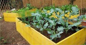 coltivazione nel cassone