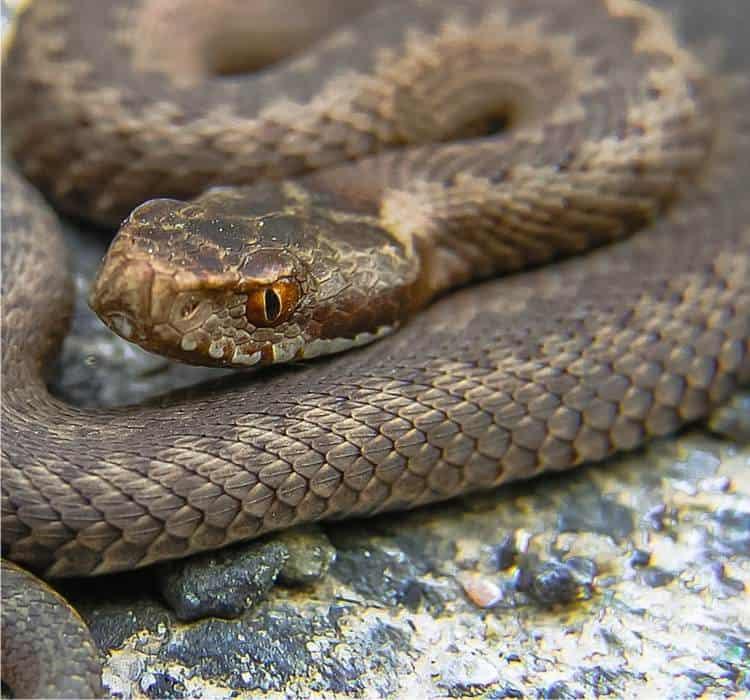 Serpenti: riconoscerli e rispettarli