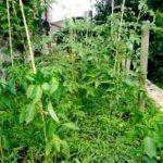 """Coltivare tra le erbacce: l'orto del """"non-fare"""""""