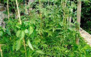 agricoltura naturale e orto del non fare
