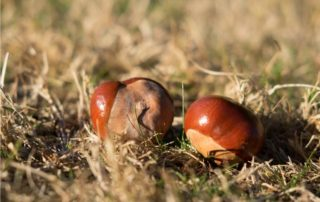 castagne di stagione