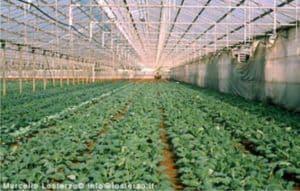 serra biodinamica agrilatina