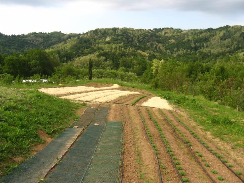 Orto biodinamico: cos'è l'agricoltura biodinamica