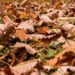 Pacciamatura invernale: tenere al caldo le piante