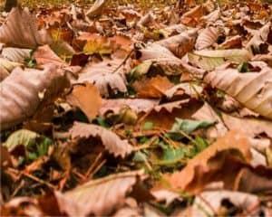 pacciamatura di foglie